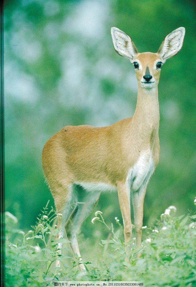 松树 树枝 草地 观望 花 野生动物 自然生物 吉祥生物 非洲野生动物