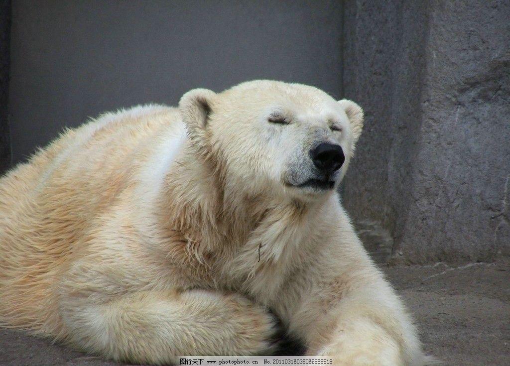 北极熊 冰 南极 动物 野生动物