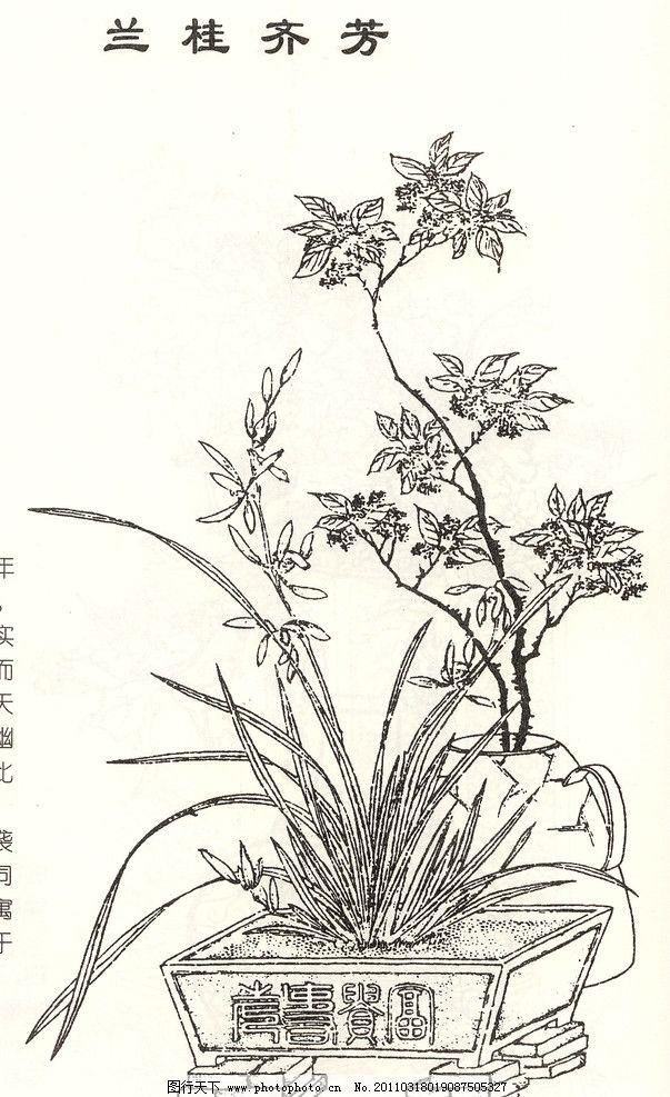 桂花图片手绘画