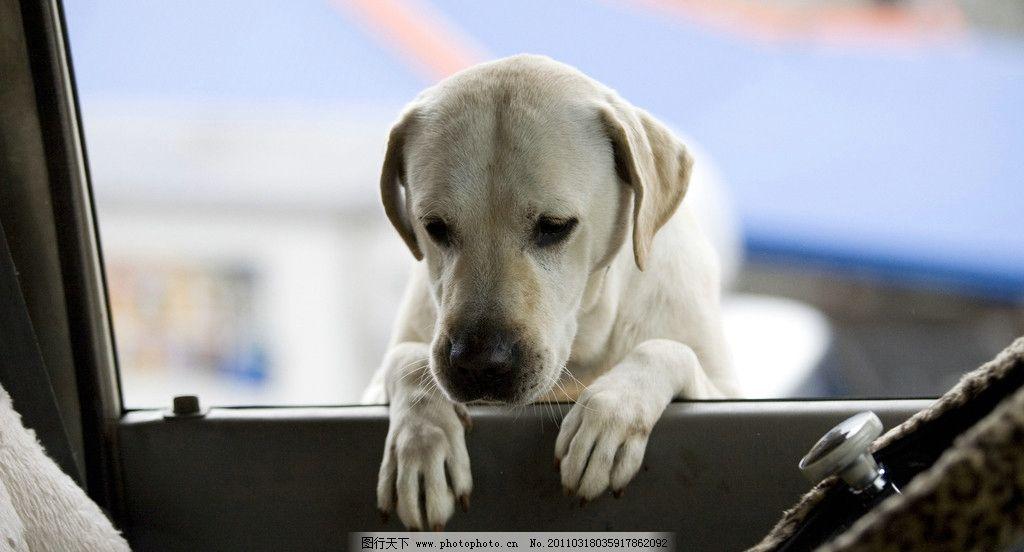 心心历险记2 可爱狗狗图片