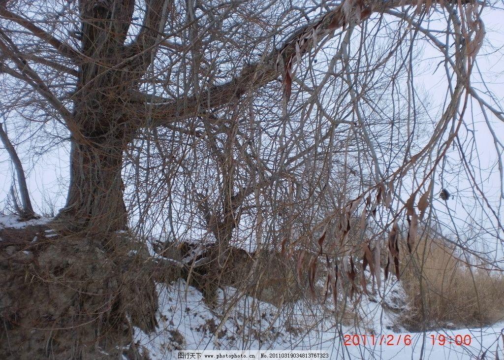 大树根 干树 断墙 白雪 冬天 树干 自然风景 自然景观 摄影 72dpi jpg