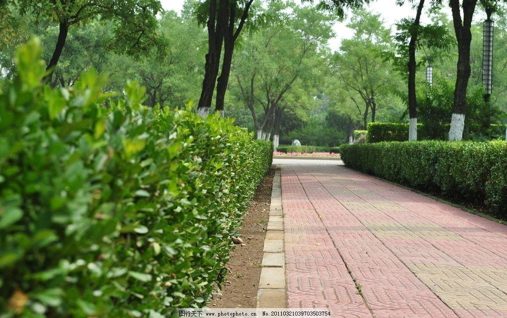小路与灌木图片_其他_建筑园林