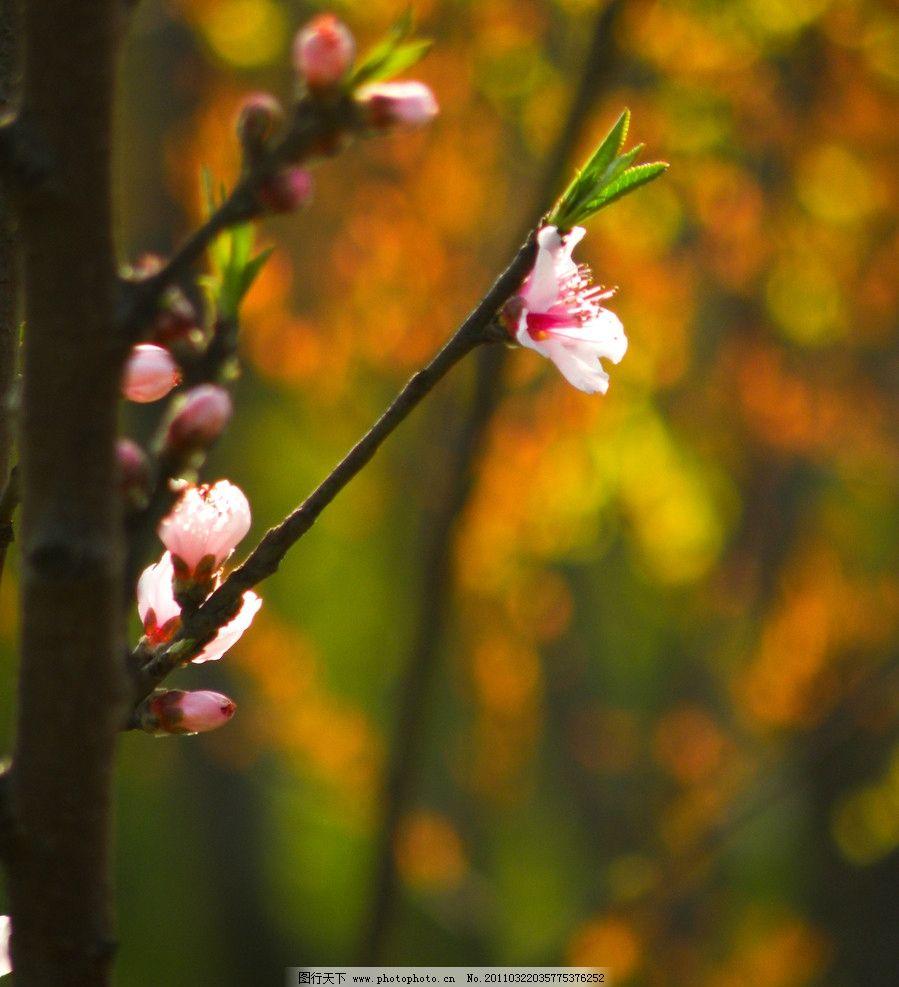 特写桃花 春天 色彩斑斓 虚化背景 花草 生物世界 摄影