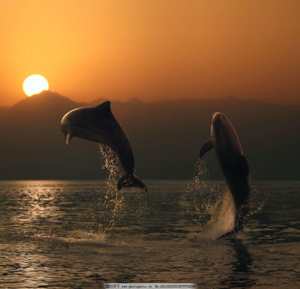 海面飞跃的海豚