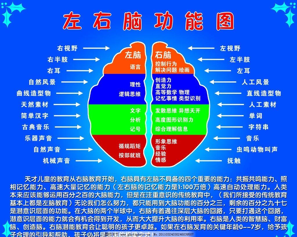 左右脑功能图 左脑 儿童 音乐 声音 理性 思维 宣传模板 展板模板