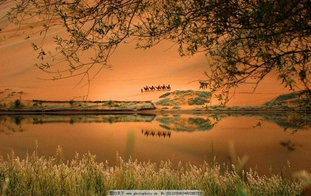 内蒙古 阿拉善 额济纳 巴丹吉林沙漠 一望无际 金色 湖 树木 驼队