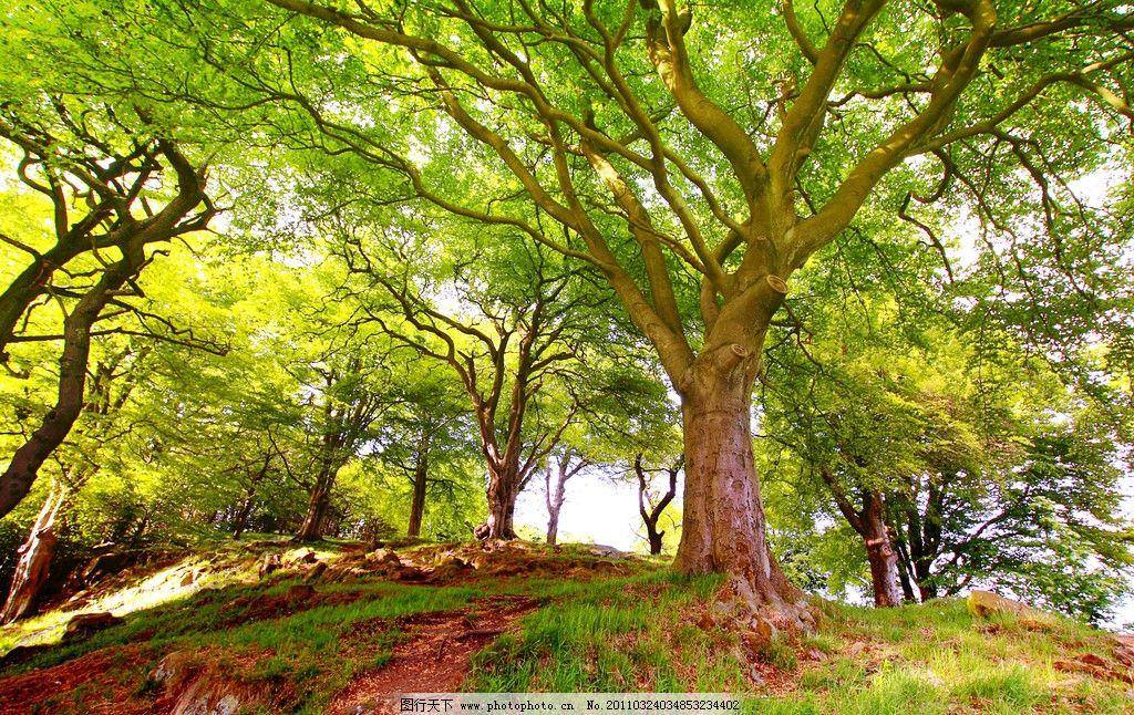 设计图库 自然景观 自然风景  大树 公园 生态公园 森林公园 公园绿