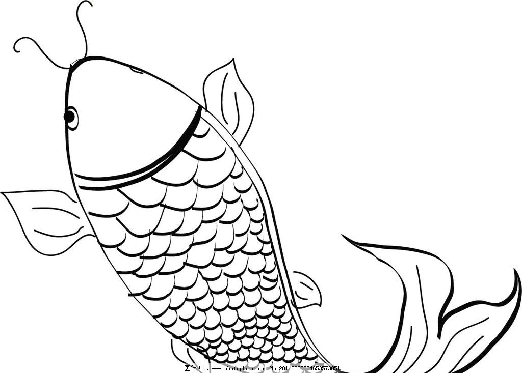 鲤鱼矢量图图片