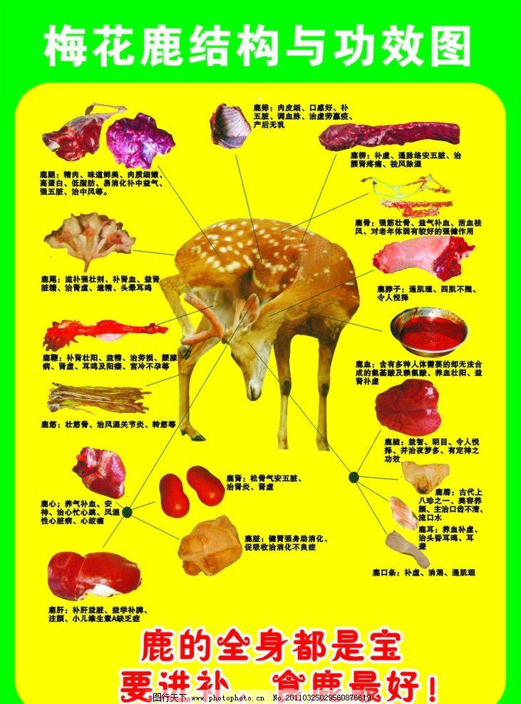 功效图 结构图 鹿腿 精肉 鹿尾 鹿鞭 鹿筋 鹿肝 鹿肾 鹿肚鹿脑 鹿唇