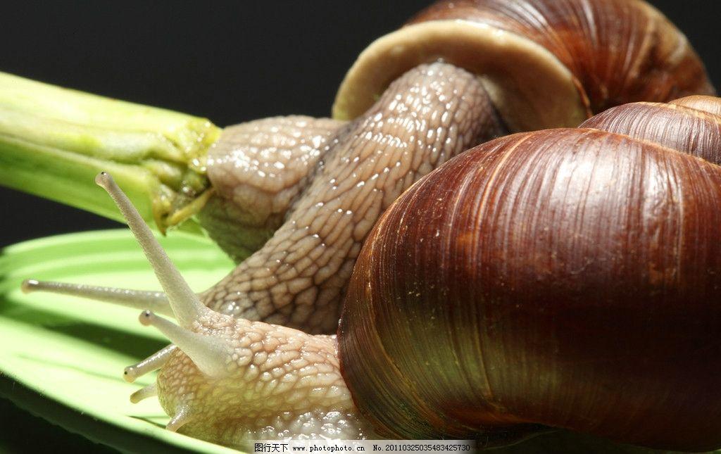 蜗牛 可爱蜗牛 昆虫 软体动物 动物摄影 生物世界 摄影 300dpi jpg