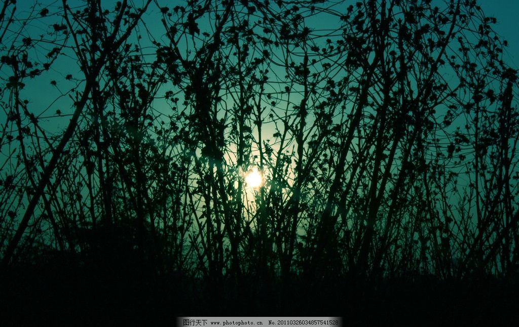 晨光 日出 丛林 剪影 自然风景 自然景观 摄影