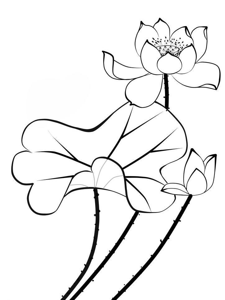 白描荷花图片,国画 黑白 手绘花 水墨 白描荷花素材