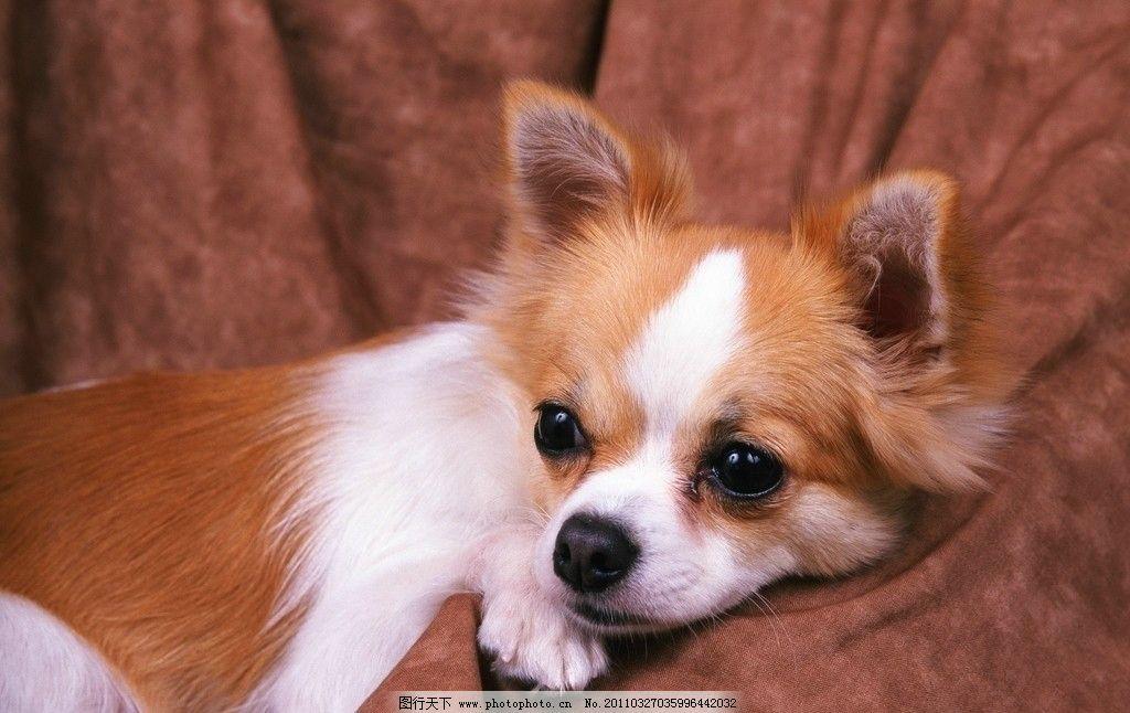 可爱的宠物都有什么