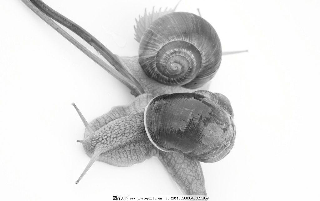 蜗牛 可爱的蜗牛 昆虫 茎叶 软体动物 动物摄影 生物世界 摄影 300dpi