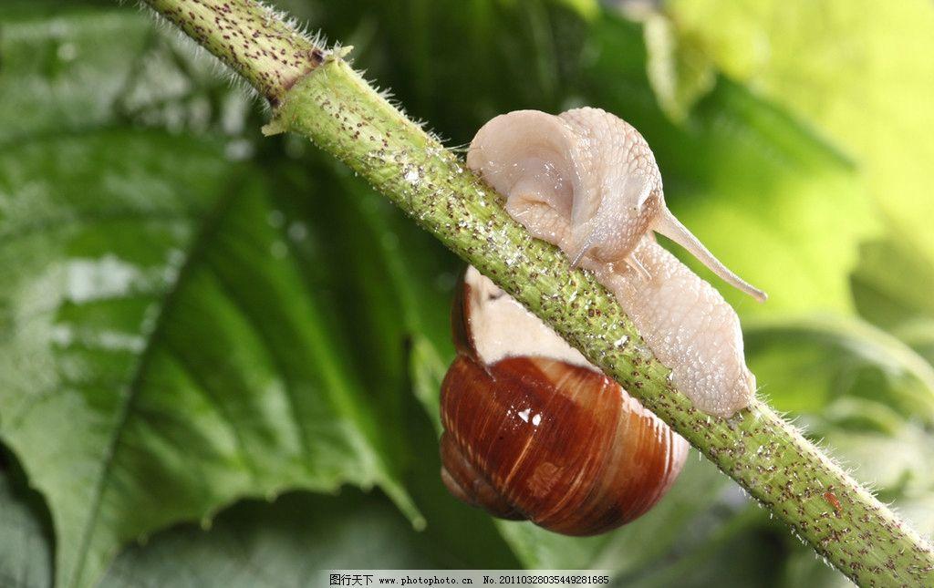 可爱的蜗牛 蜗牛 昆虫 树叶 绿叶 软体动物 动物摄影 生物世界 摄影