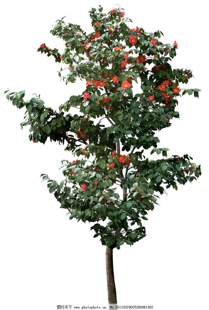 园林树木花朵透明png图片