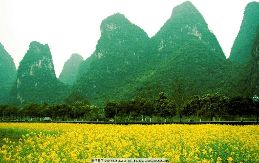 油菜花 桂林山水 田园风光 春天 摄影