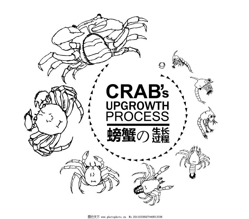 螃蟹 螃蟹生长发育过程 矢量螃蟹 蚤状细体 大眼幼体 仔蟹 海洋生物
