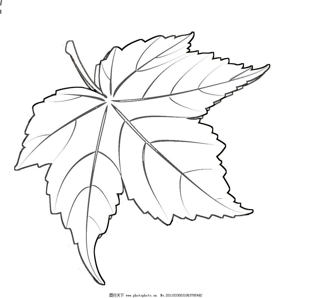 枫叶 手绘效果 矢量素材 psd格式 叶子 其他模版 广告设计模板 源文件