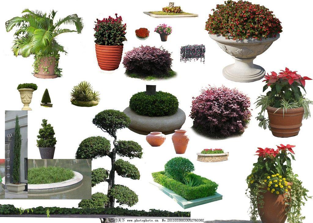 植物灌木素材 花坛 植物 灌木 园林小品 园林植物素材 花 红花继木