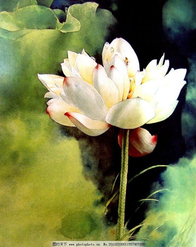 绰约一枝遮不住 美术 绘画 中国画 彩墨画 工笔重彩画 花卉 荷花 荷花