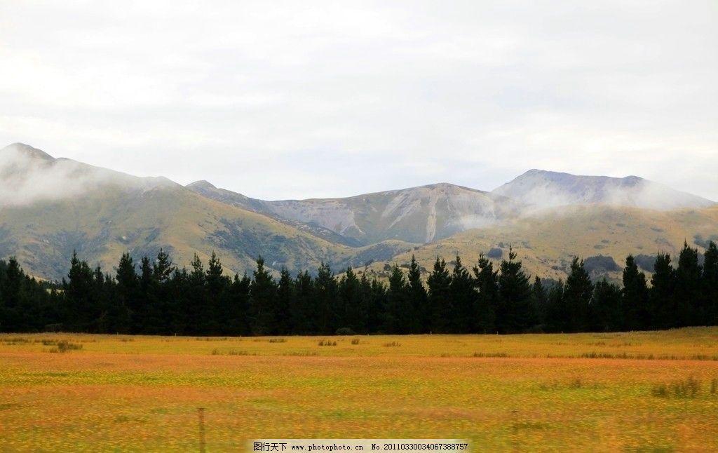 南岛风景 新西兰 南岛 牧场 草地 云雾 树木 山脉 风景 新西兰风光
