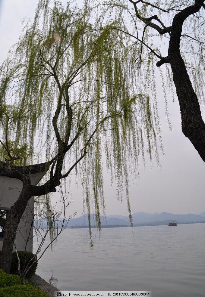 西湖垂柳 西湖 小船 春天 柳树 柳枝 湖水 远山 垂柳 嫩绿 芽 风景