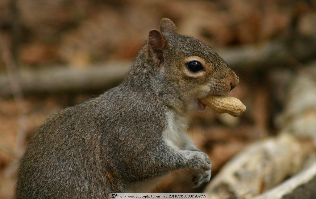 小松鼠 松鼠 可爱 动物 野生动物jpg 野生动物 生物世界 摄影 180dpi