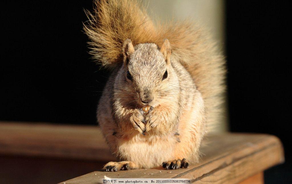 吃东西的小松鼠 松鼠 可爱 动物 野生动物jpg 野生动物 生物世界 摄影